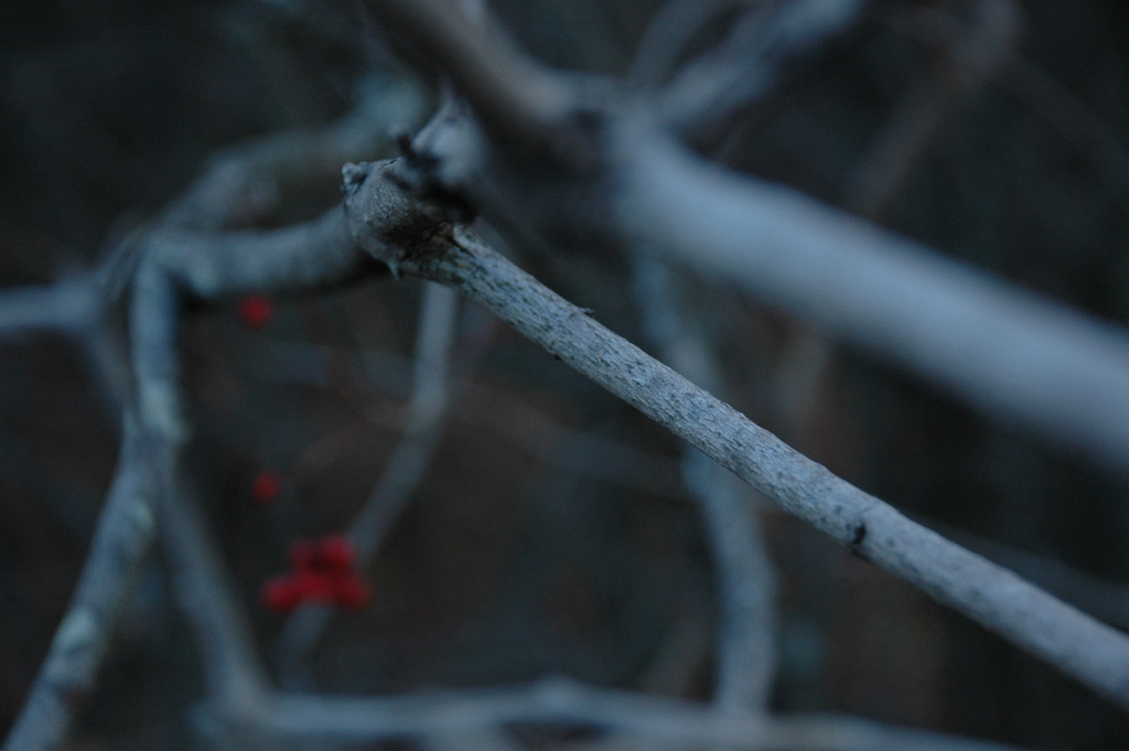 twig and berries